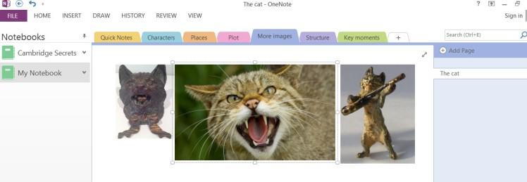 Screen shot with wildcat